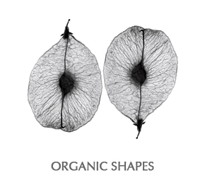 jens hauge organic shapes